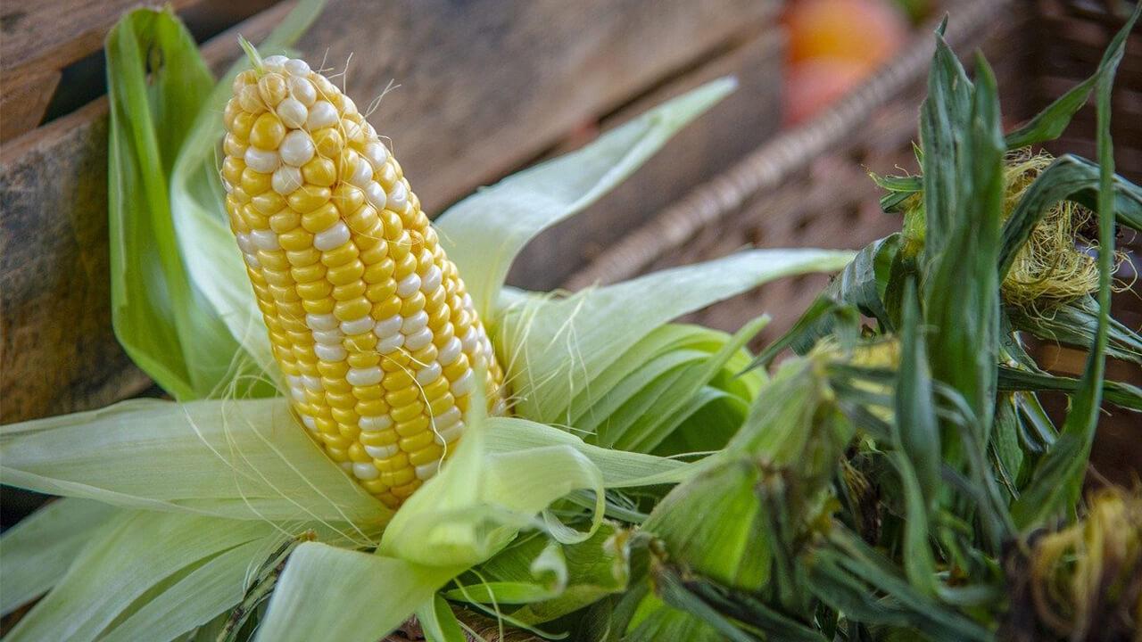 gamme-produits-distributeur-semences-haute-garonne